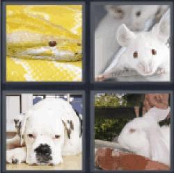 4-pics-1-word-albino