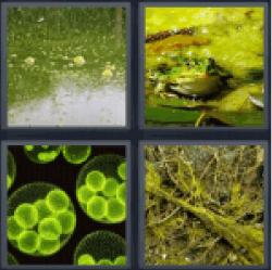 4-pics-1-word-algae