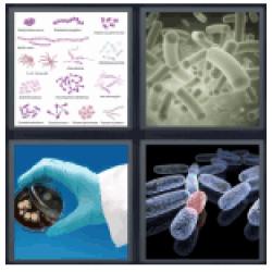 4-pics-1-word-bacteria