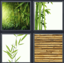 4-pics-1-word-bamboo