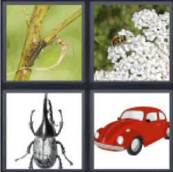4-pics-1-word-beetle