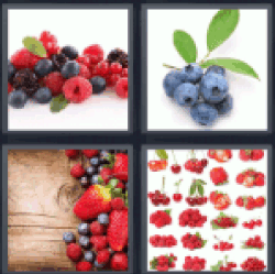 4-pics-1-word-berries