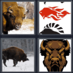 4-pics-1-word-bison
