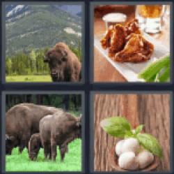 4-pics-1-word-buffalo