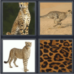 4-pics-1-word-cheetah