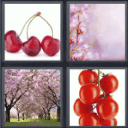 4-pics-1-word-cherry