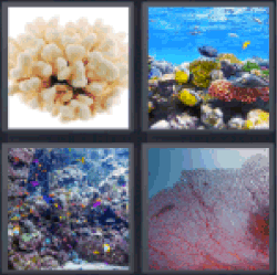 4-pics-1-word-coral