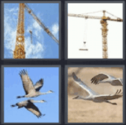 4 pics 1 word birds flying