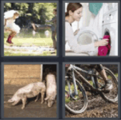 4 pics 1 word pigs in mud