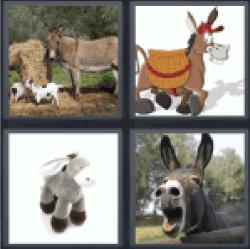 4-pics-1-word-donkey