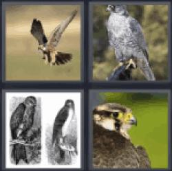 4-pics-1-word-falcon