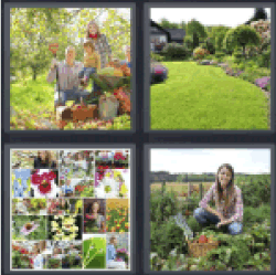 4-pics-1-word-garden