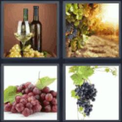 4-pics-1-word-grape