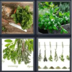 4-pics-1-word-herbs