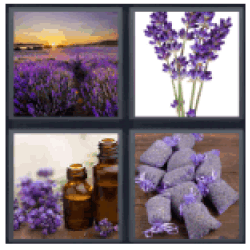 4-pics-1-word-lavender