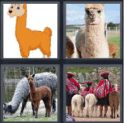 4-pics-1-word-llama