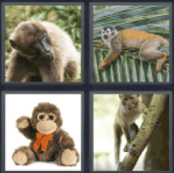 4-pics-1-word-monkey