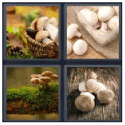 4-pics-1-word-mushroom