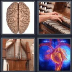 4-pics-1-word-organ