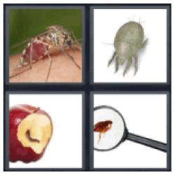 4-pics-1-word-parasite