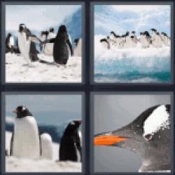 4-pics-1-word-penguin
