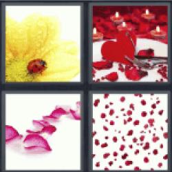 4-pics-1-word-petals