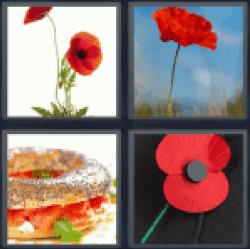 4-pics-1-word-poppy