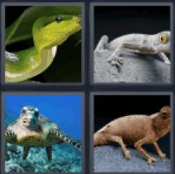 4-pics-1-word-reptile