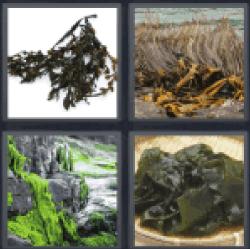 4-pics-1-word-seaweed