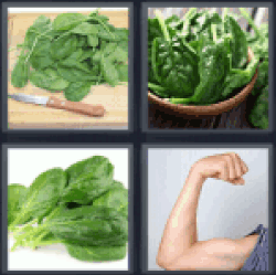 4-pics-1-word-spinach