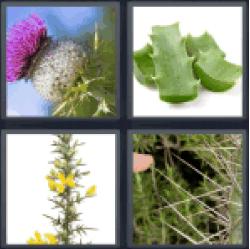 4-pics-1-word-thorn