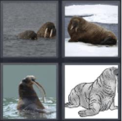 4-pics-1-word-walrus
