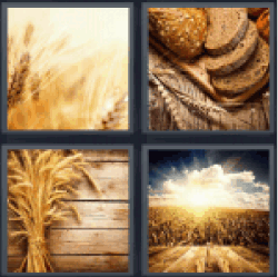 4-pics-1-word-wheat