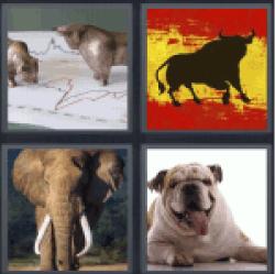 4-pics-1-word-bull