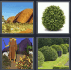 4-pics-1-word-bush