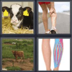 4-pics-1-word-calf