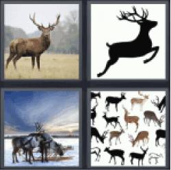 4-pics-1-word-deer