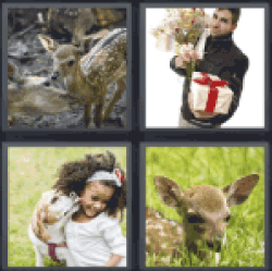 4-pics-1-word-fawn