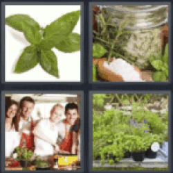 4 Pics 1 Word aromatic herbs