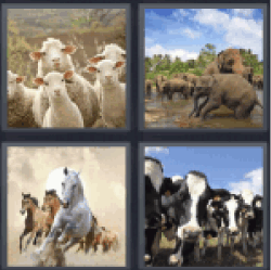 4 Pics 1 Word galloping horses