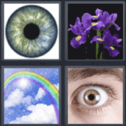 4 Pics 1 Word rainbow. Violet flowers. Eye