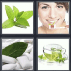 4 pics 1 word mint leaves all answers 4 pics 1 word 4 pics 1 word mint leaves mint toothpaste mints mint tea expocarfo Image collections