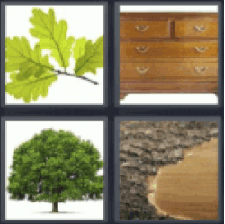 4 Pics 1 Word leaves tree