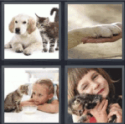 4 Pics 1 Word puppy and kitten