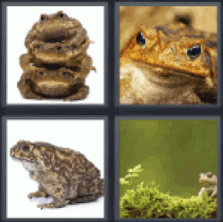 4-pics-1-word-toad