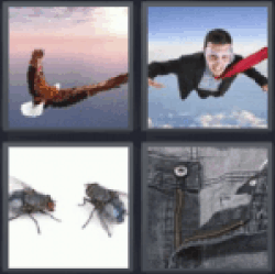 4 pics 1 word eagle flying