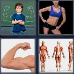 4 pics 1 word 6 letters answers!! (^_^) easy search updated!!, Muscles