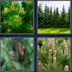 4 pics 1 word 7 letters answers easy search updated answer conifer expocarfo Images