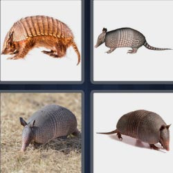 4 pics 1 word Strange animal