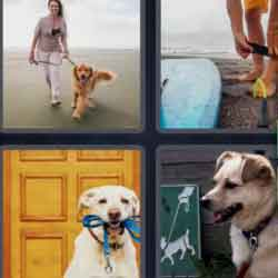 4 pics 1 word dogs